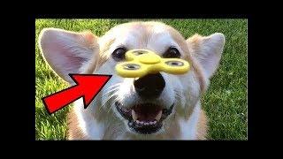 Собачки и спиннер - подборка смешных видео с собачками. NEW