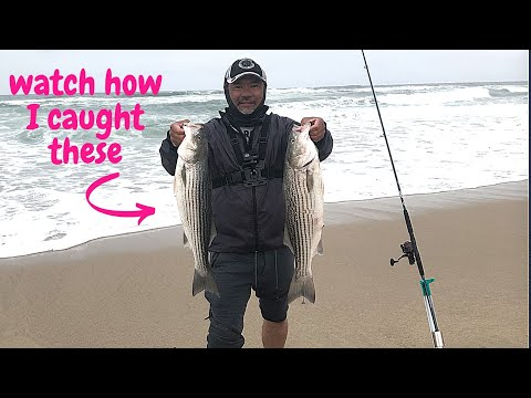 Striped Bass Surf Fishing In Half Moon Bay.