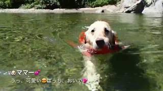岐阜県にある清流「板取川」で、川遊びさせました。天気も良く気温もど...
