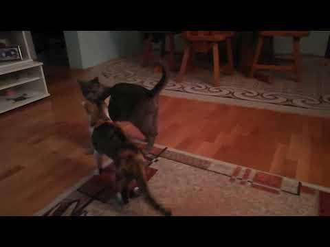 Bruce Lee VS Cats