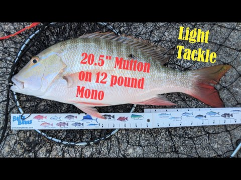 Keeper Mutton Snapper Caught On Light Tackle - Fishing The Florida Keys