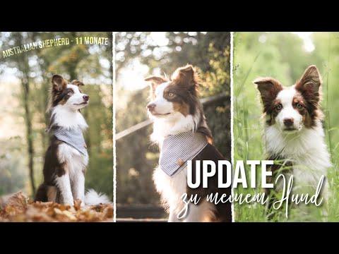 Warum Aussie als Ersthund und bereue ich meine Entscheidung?   Jack Update