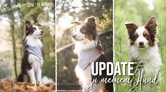 Warum Aussie als Ersthund und bereue ich meine Entscheidung? | Jack Update
