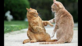 ПРИКОЛЫ С КОТАМИ И СОБАКАМИ 2021 Приколы со смешными животными Смешные котики Подборка 5