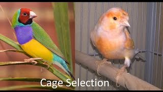 How to take care of Gouldian finches and Canaries. About cage. Part 2.