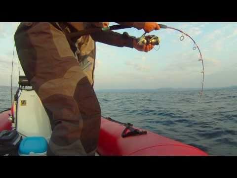 Jigging : Big Bluefin Tuna Au Jig En Nokill By Jojo