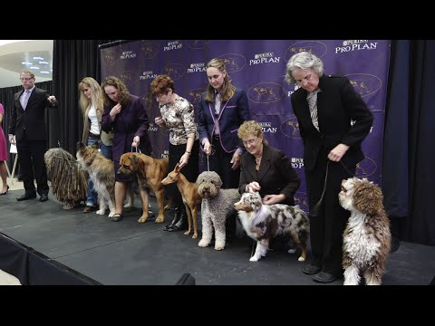 7 New Breeds added to the Westminster Kennel Club Dog Show 2016