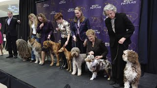 Seven breeds will make their First Appearance at Westminster for th...