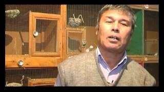 Канарейки в Таджикистане фильм