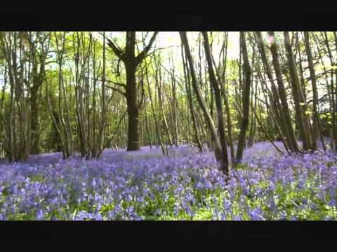 THE BLUEBELL POLKA  JIMMY SHAND