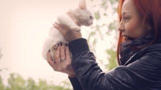Бездомные животные: дай им шанс на жизнь | Социальная реклама
