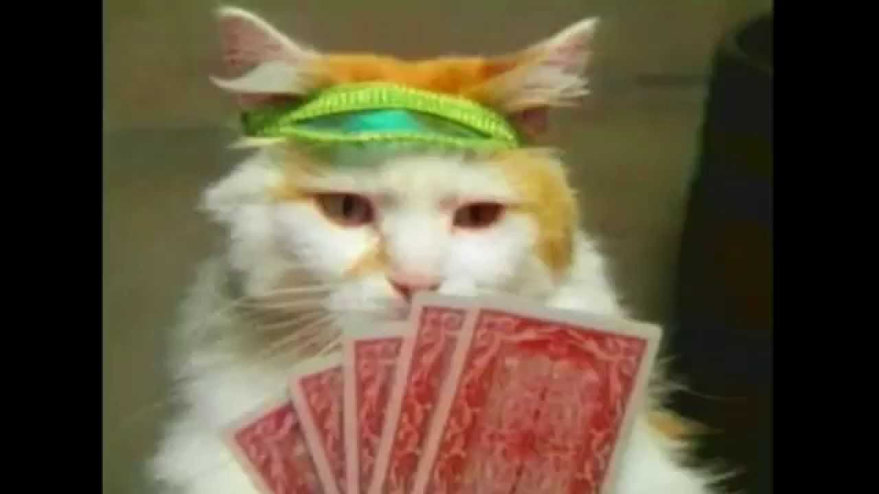 Cats Gambling