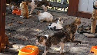 'Kedi Kasabası'ndaki kediler Mozart'ın 'Türk Marşı' ile yemek yiyor