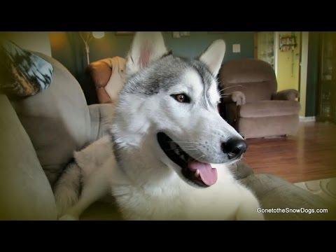 Female Dog vs Male Dog?  Fan Friday #145