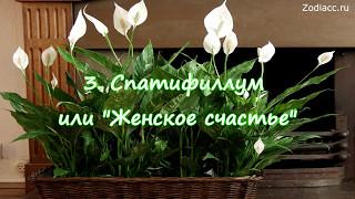 Топ-5 самых полезных комнатных растений