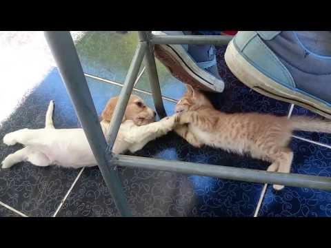 Cat and Dog Friendship – GIF – VINE Video (Kedi Köpek Dostluğu gif ve vine için video)
