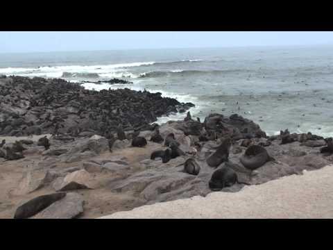 Cape Fur Seal Colony - Cape Cross, Namibia