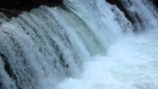 北海道のサクラマスの遡上する滝です.