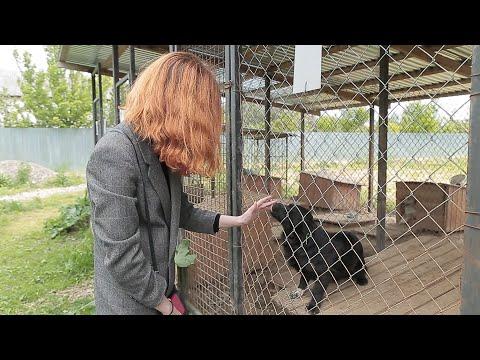 Суспільне Буковина: У центрі стерилізації знову можна вигуляти собак