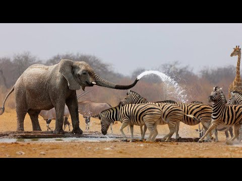 Download Wild Life - Nature Documentary Full HD 1080p
