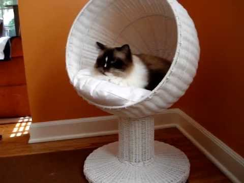 Ragdoll Cat Reviews Modern Cat Bed by The Refined Feline - ラグドール - Floppycats
