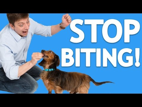How to Train your Dog Good Manners and to Take Treats Gently!