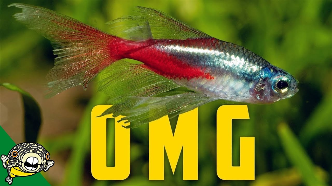 so-many-fish-i-ve-never-seen-before-aquarium-glaser-tour