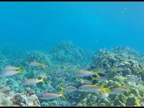 Maluaka Snorkeling: Hidden Coral Reef Gem In Turtle Town