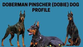 Doberman Pinscher (Dobie) Dog Profile