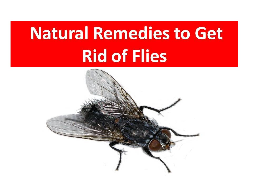 Easy Way How To Get Rid Of A House Flies Kill House Flies Youtube