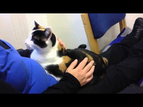 how much is it to get a cat neutered in ireland