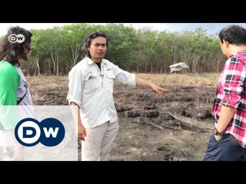 Kampf gegen die Palmöl-Mafia   DW Reporter