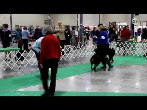 012811 Chain O Lakes KC -  Rottweiler American Bred Dogs