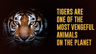 12 Incredible Facts About Tigers