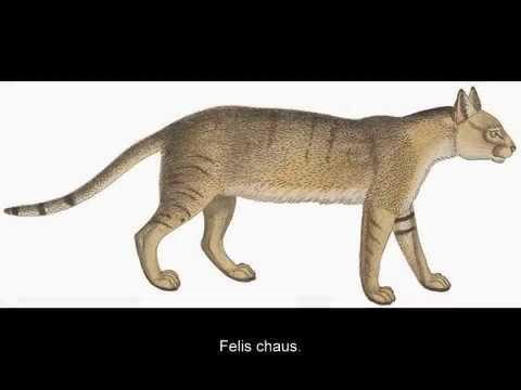 el-gato-y-el-perro-en-el-antiguo-egipto.-(historia-de-egipto)