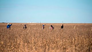 Trump dives into controversy over South Africa's land policies and farmer killings