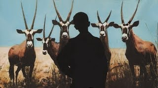 David Van Tieghem - Hunted Animals