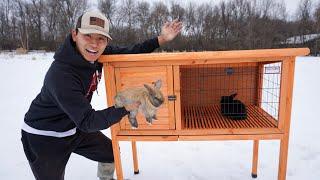 Starting My Own RABBIT FARM! (Buying Baby Rabbits)