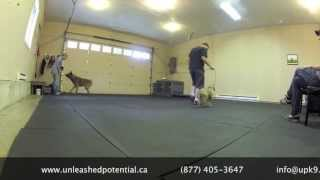 Upk9 Balanced Dog Training Works Best