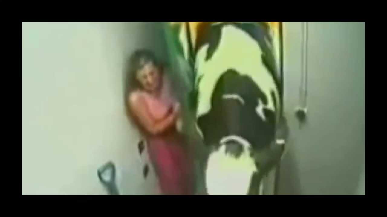 Video fun et drole humour une vache qui rentre dans un - Image de vache drole ...
