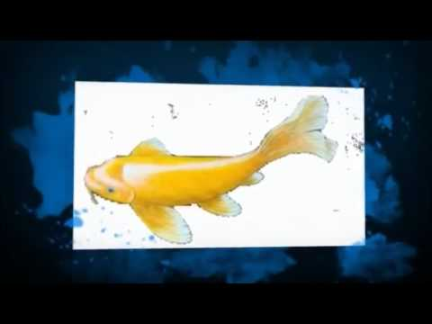 3d fish pond live wallpaper youtube - 3d koi pond live wallpaper iphone ...