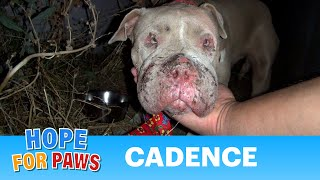 Saving Cadence - an abused Pit Bull shows us the power of second chances.  Please share. thumbnail
