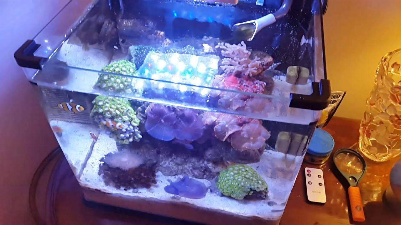 Fish for aquarium in kolkata - Nano Reef Tank By Marine World Kolkata India