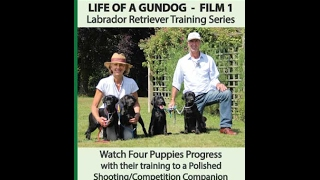 Life Of A Gundog - Film 1 - Labrador Retriever Training Series