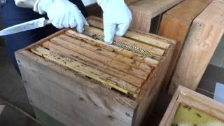 Préparation de nucleus en série sur ruches warré avec 3 rayons minimum