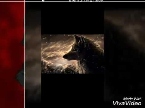 Anime wolves ~ I'm gonna show u crazy {lyrics}