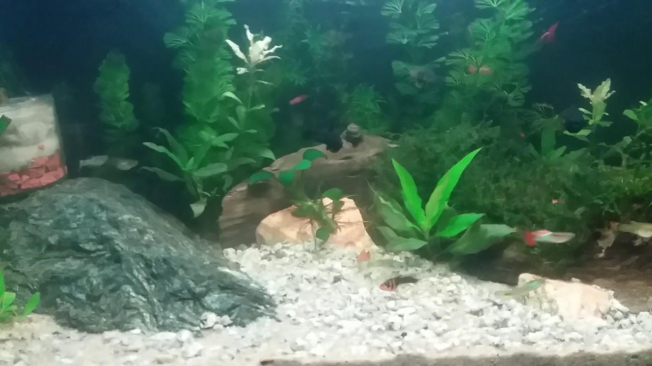 Olha como está  o aquário achado na Rua
