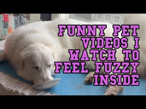 Funny pet videos I watch to feel fuzzy inside || Funny Animal Videos