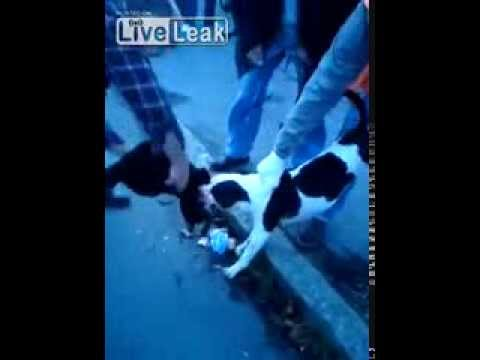 Pit Bull attacking a pet cat on the street ;(