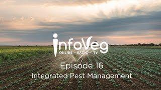 InfoVeg TV Episode 16 | Integrated Pest Management